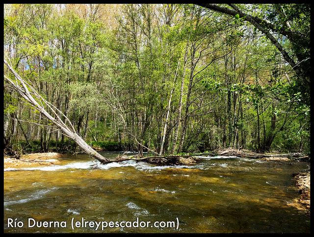 Río Duerna (León) - Coto de Priaranza