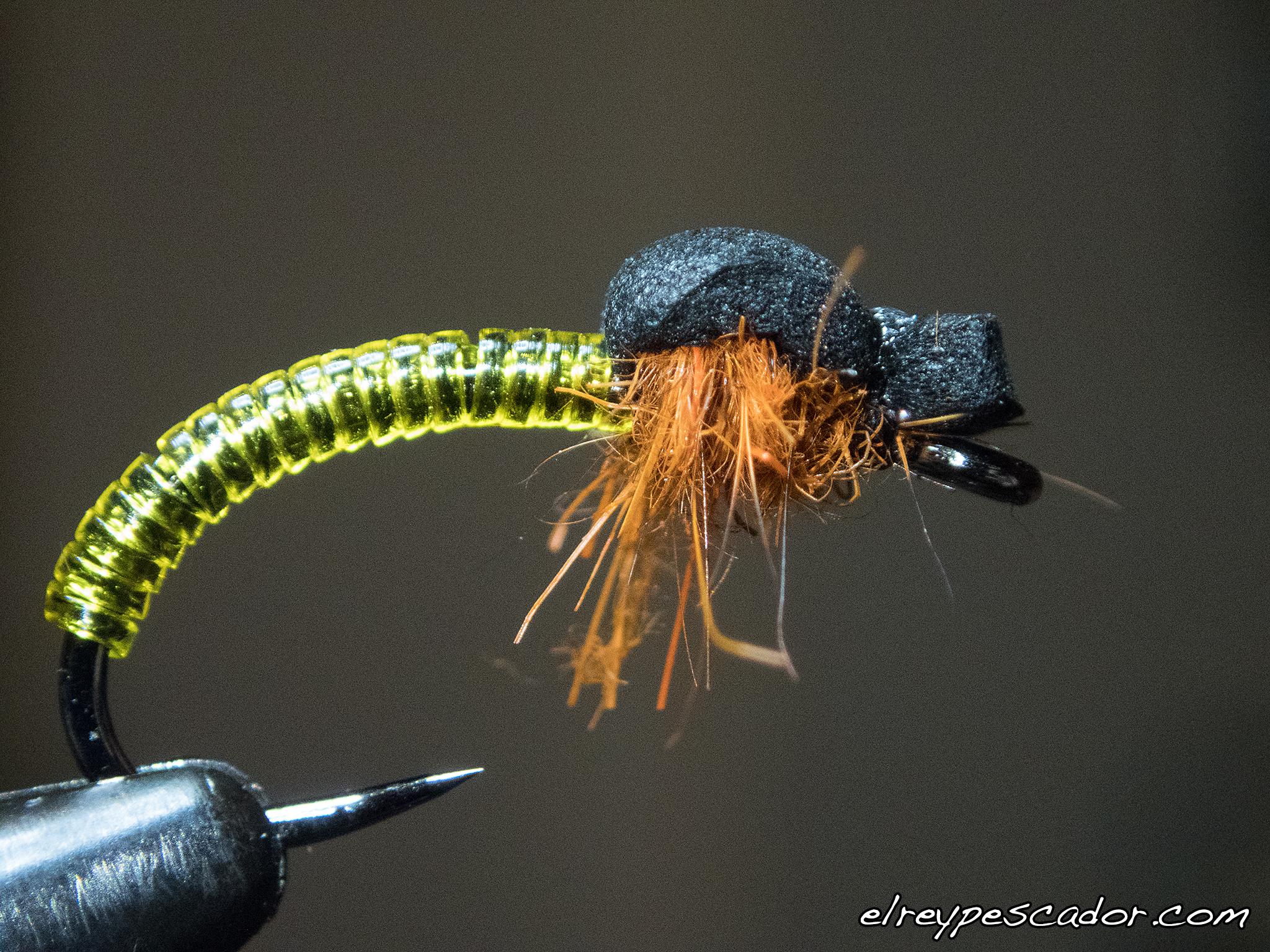Ninfa quironómido / Chironomidae nymph