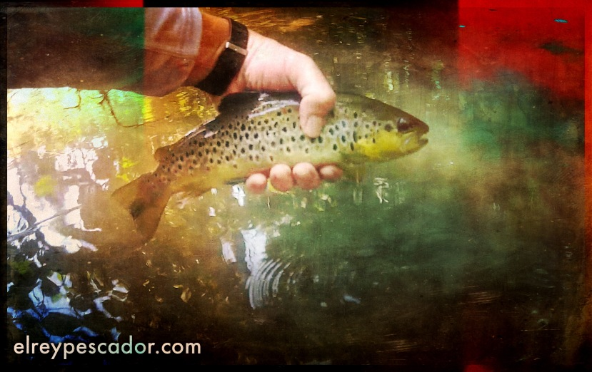 "Trucha del río Dulce / Trout from the ""Dulce"" River"